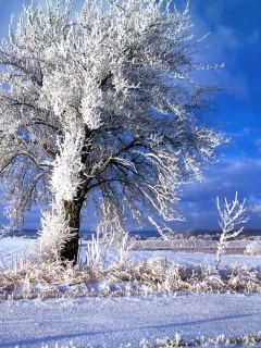 Картинки о зиме 240х320